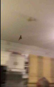 catch-a-bat