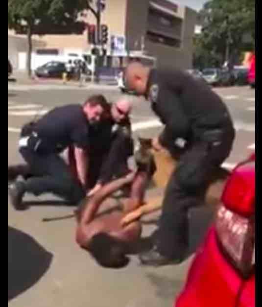 handling police dog