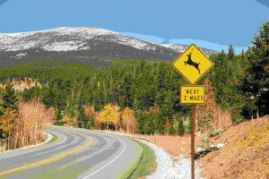mckinney roughs road